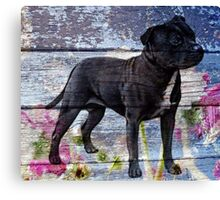 Staffy old painted wood  Canvas Print