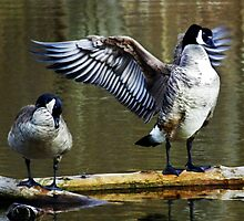 Goose Salute by Laurie Minor