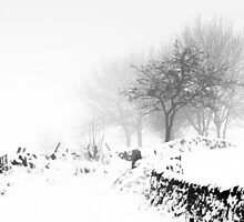 Snowy Lane by TomGreenPhotos