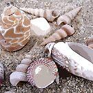 Beach Shells by LindaLou1952
