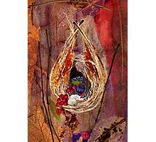 Welcome to my bower Photographic Print