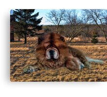 I'M HAVING DAYDREAMS ABOUT NIGHT THINGS IN THE MIDDLE OF THE AFTERNOON - CANINE PICTURE/CARD/PILLOW Canvas Print