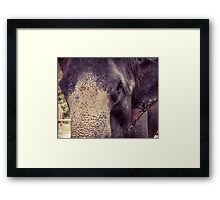 Close-up shot of Asian elephant head Framed Print
