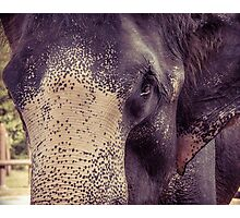 Close-up shot of Asian elephant head Photographic Print