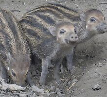 Three Little Pigs by Thea 65