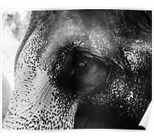 Close-up shot of Asian elephant head Poster