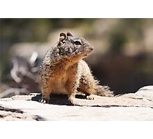 Rock Squirrel Photographic Print