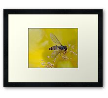 Resting Hoverfly Framed Print