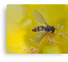 Resting Hoverfly Canvas Print