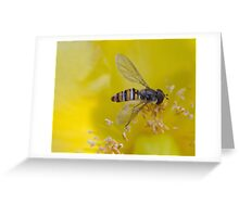 Resting Hoverfly Greeting Card