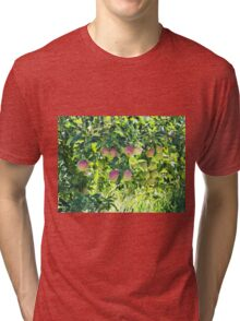 Apples On The Tree Tri-blend T-Shirt