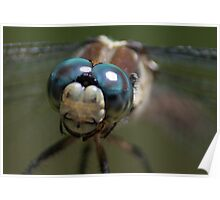 Real Closeup Dragonfly Poster