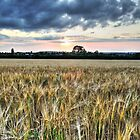 Wheat Field at Sunset (HDR) by Dale Rockell