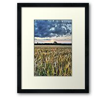 Wheat Field at Sunset (HDR) Framed Print