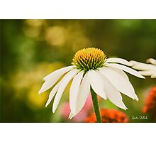 Summer Sunshine Photographic Print