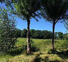 Poplar Trees in the Breeze by HeklaHekla
