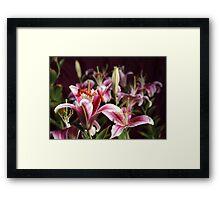 Lily Morning Framed Print