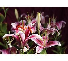 Lily Morning Photographic Print