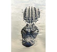 American Alligator floating in water Photographic Print