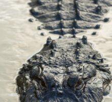 American Alligator floating in water Sticker