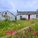 The Summer Blooms Of Rural Ireland by Fara