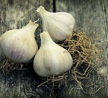 Garlic by Caroline Fournier
