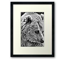 Brown Bear HDR Framed Print