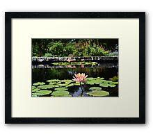 Lily Pad Framed Print