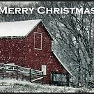 Barn Bluster Christmas Card by © Bob Hall