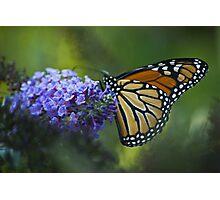 Enchanting Monarch Photographic Print