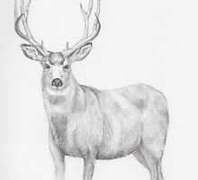 Deer Drawing by brennaq