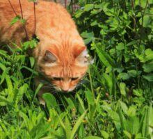 Ginger cat hunting in garden Sticker