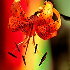 TIGER LILY by RoseMarie747