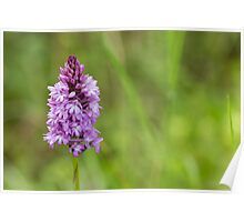 Scented Orchid Poster