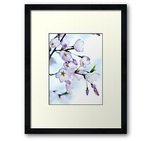 Sakura Japanese cherry blossom art photo print Framed Print