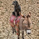 Travelling Donkey and Friend by Pauline Tims