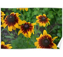 Fourth of July Flowers Poster