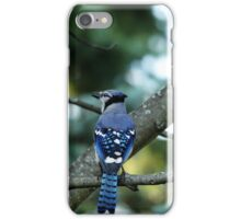Singing The Blues - Blue Jay iPhone Case/Skin