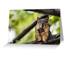 Nuts Need Zippers! Greeting Card
