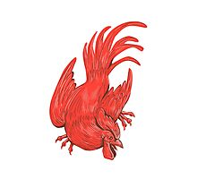 Chicken Rooster Crouching Drawing Photographic Print