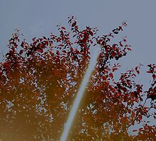 Reflections of a tree by tenagibson