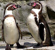 Penguins by anxiousgeek