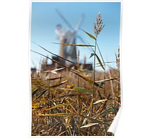Wheat and Windmill Poster
