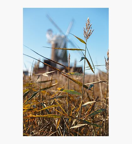 Wheat and Windmill Photographic Print