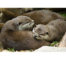 Otters at Play Photographic Print