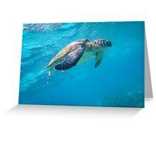 Turtle Diving, Western Australia Greeting Card