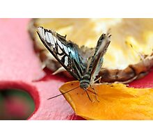 Buttefly on Fruit Photographic Print