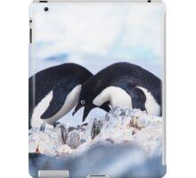 Adelie Penguin Mating Calls/Rituals, Antarctica  iPad Case/Skin