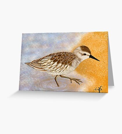 Curious Sandpiper Greeting Card