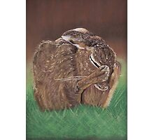 A Hare-y Moment! Photographic Print